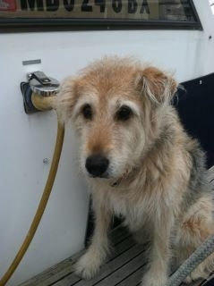 Another great boat dog
