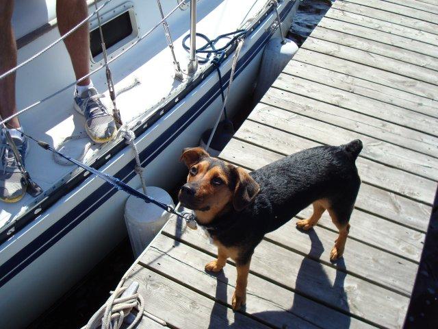 Ahoy Polli
